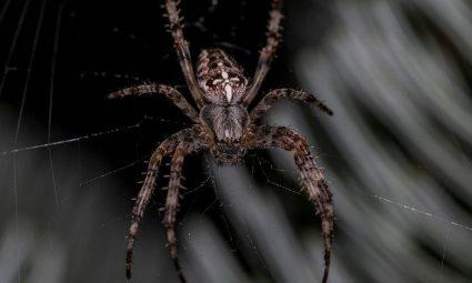 Hoe voorkom je spinnen in je huis