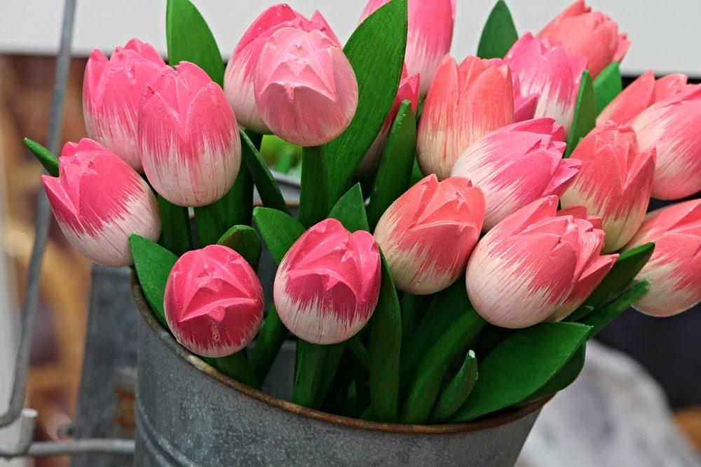 Bloei van de tulpen