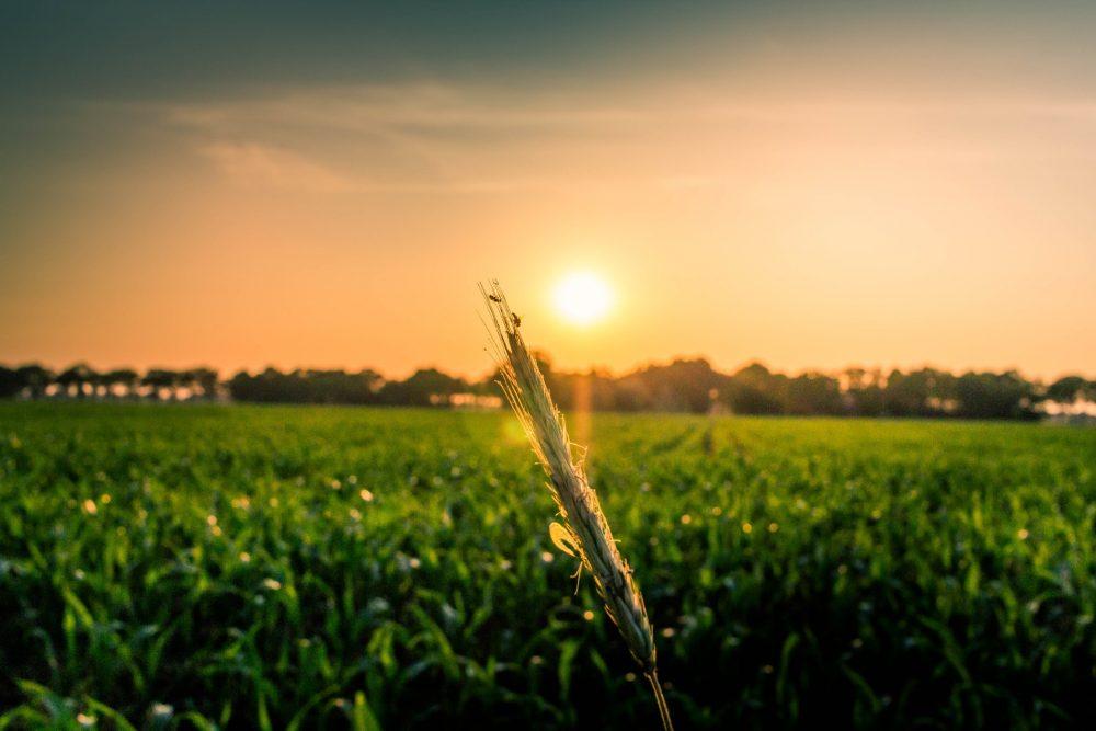 Functies in een agrarisch bedrijf vervullen