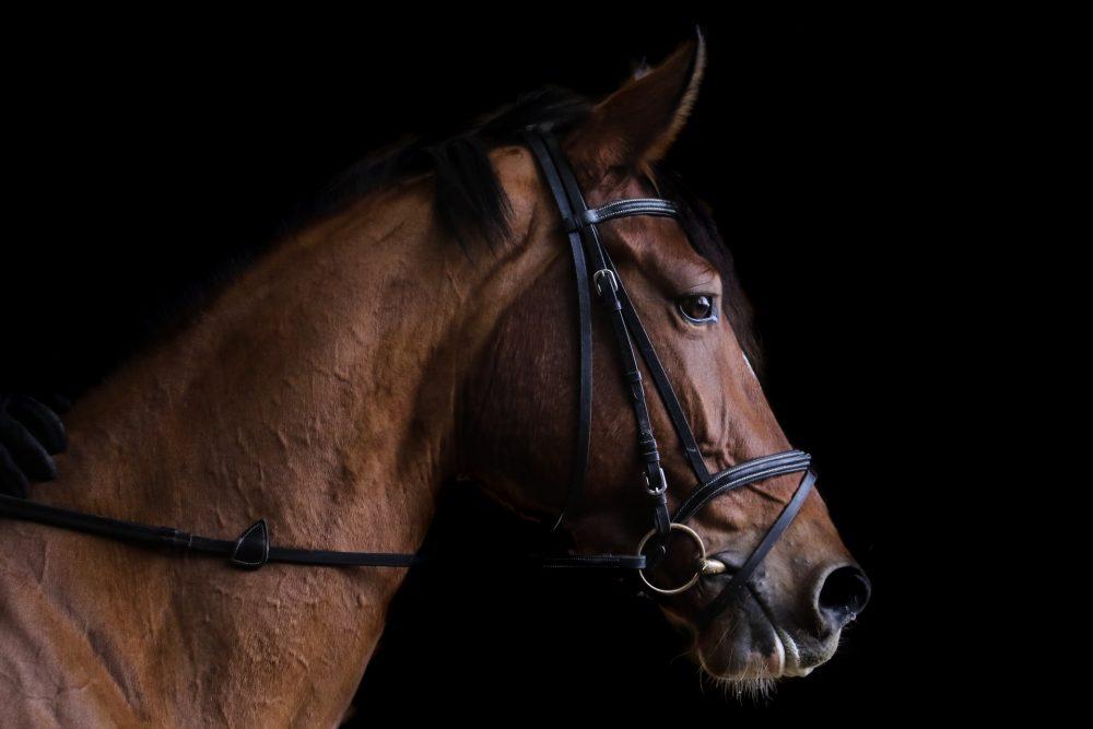 Alles wat je nodig hebt voor paardensport